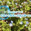 言葉では説明しづらい植物や物などを「Googleレンズ」で簡単に検索する方法