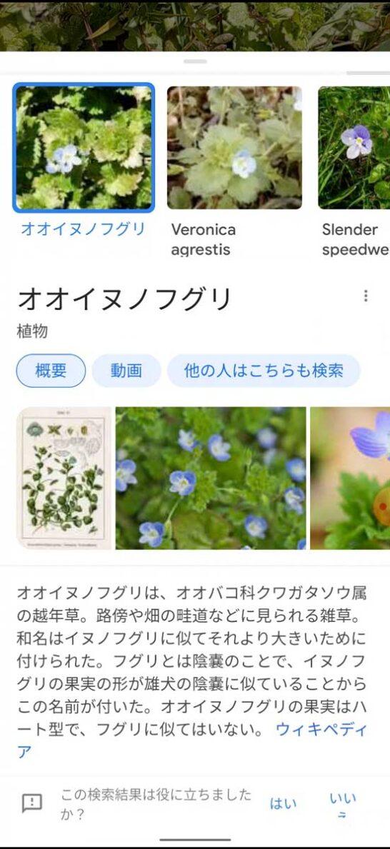 Googleレンズの検索結果