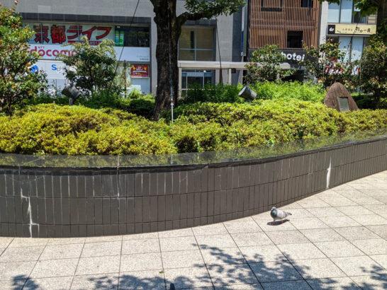 京都駅前の歩道